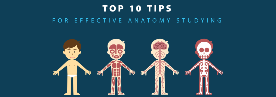 Top 10 Practical Tips For Studying Anatomy More Effectively Med